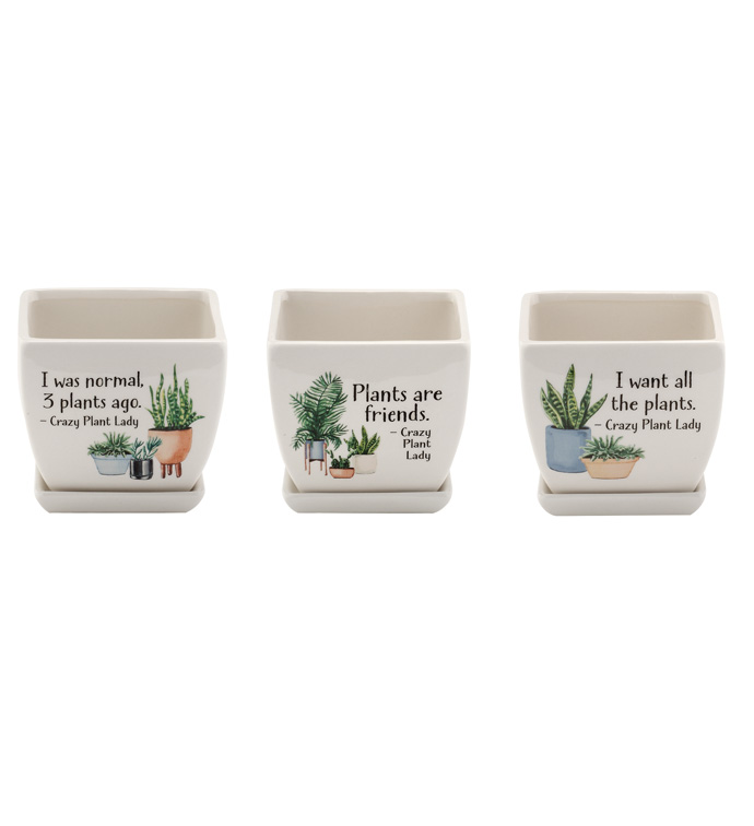 Witty Square Planter, 3 Assorted