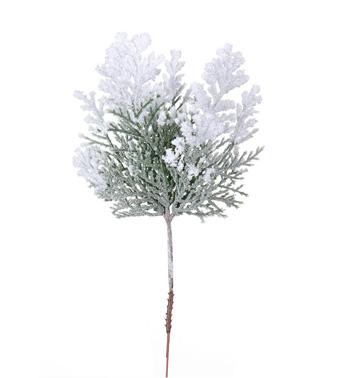 Snow Cedar Pick