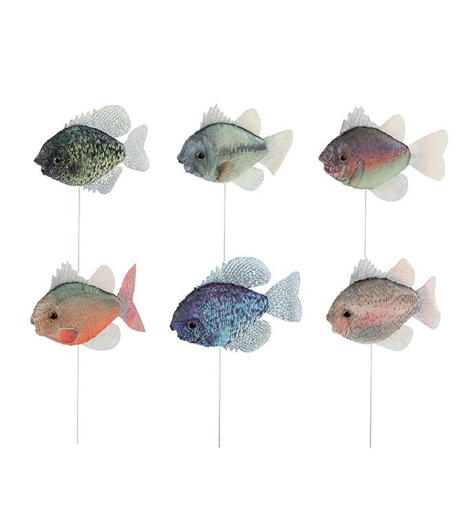 Fish Picks, 6 Assorted, 12 Pc Box