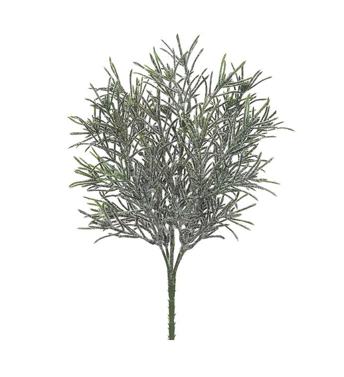 Snow Podocarpus Bush