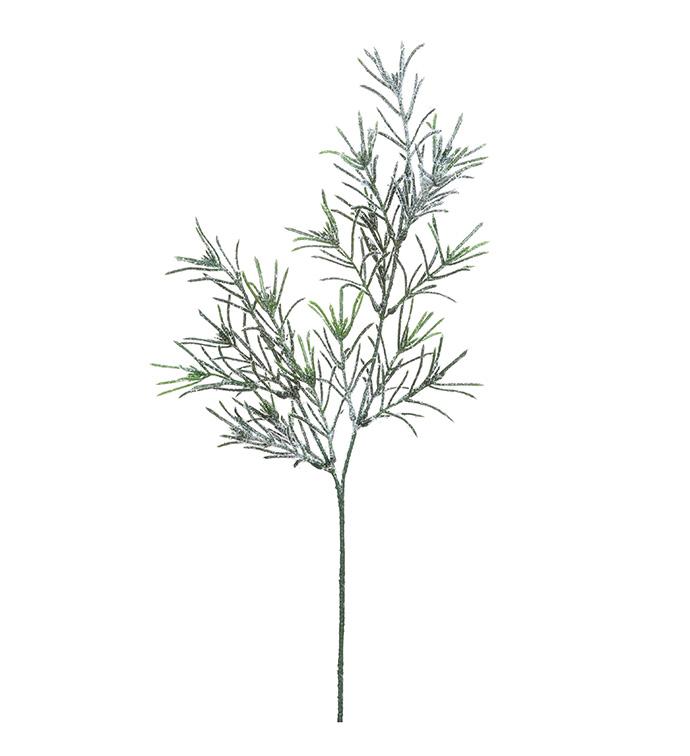 Snow Podocarpus Spray
