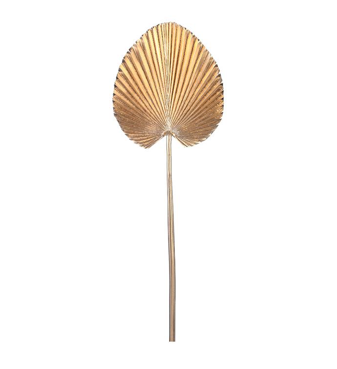 Fan Palm Golden