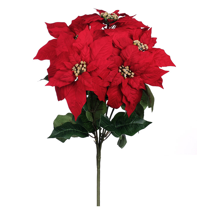 Large Red Poinsettia Bush