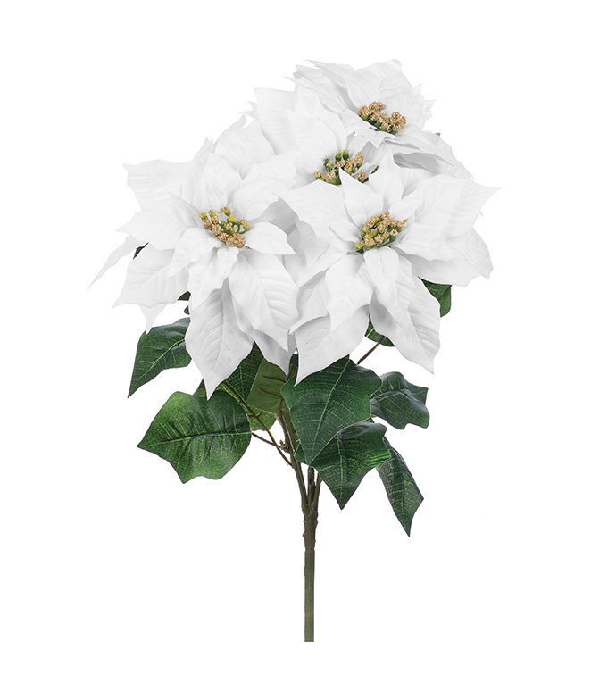 Large White Poinsettia Bush