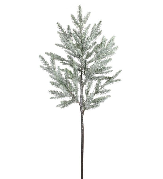 Iced Balsam Fir Branch