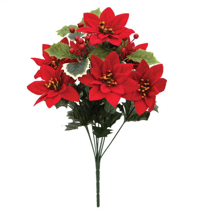 Red Poinsettia/Holly Bush