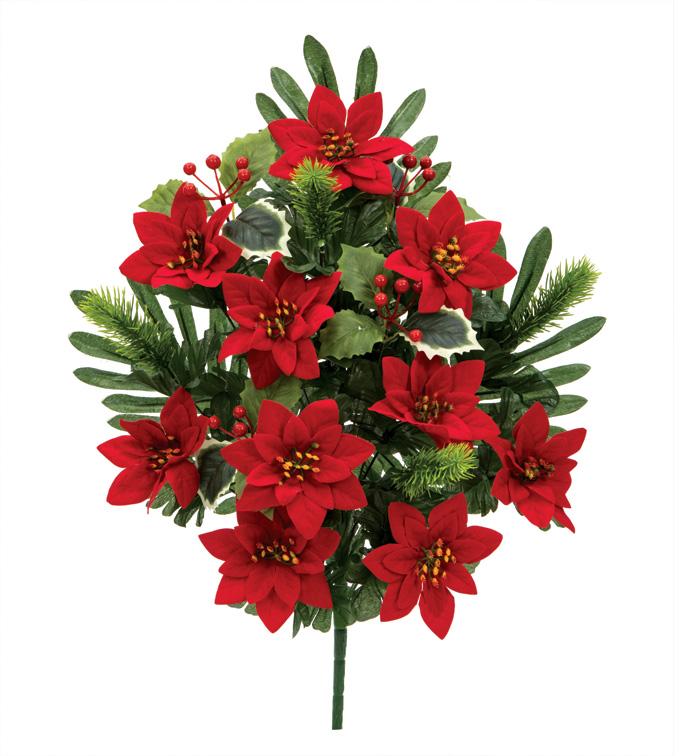 Red Mini Poinsettia Half Bush