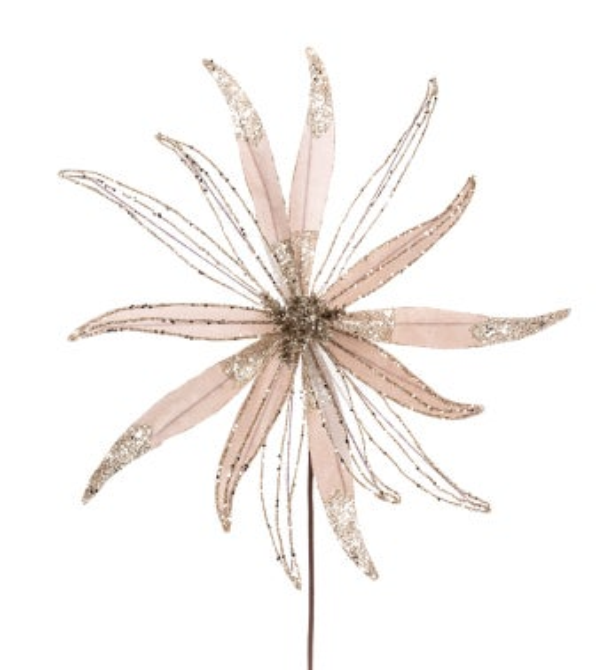Champagne Star Poinsettia