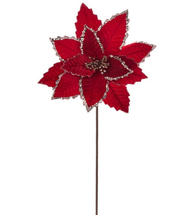 Red Velvet Poinsettia