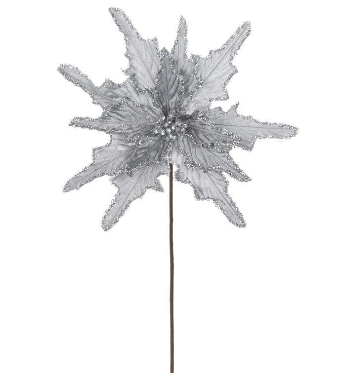 Silver Velvet Poinsettia