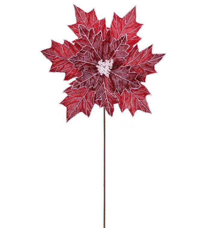 Red/White Embossed Poinsettia