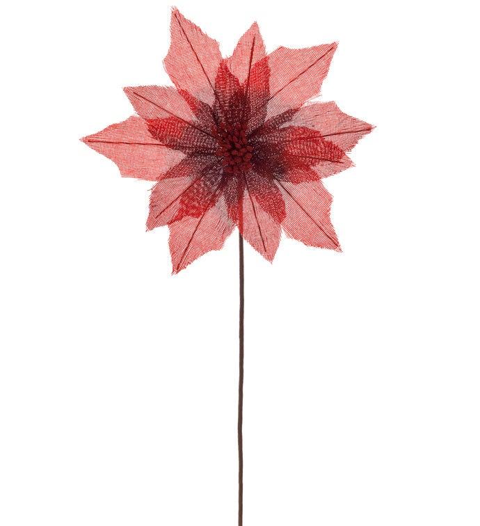 Sheer Red Poinsettia