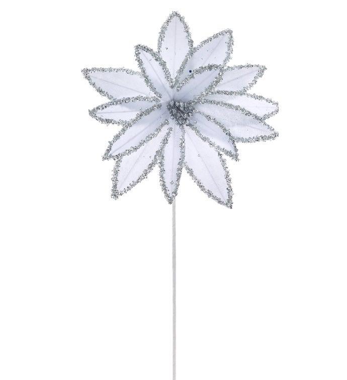White Glitter Star Poinsettia