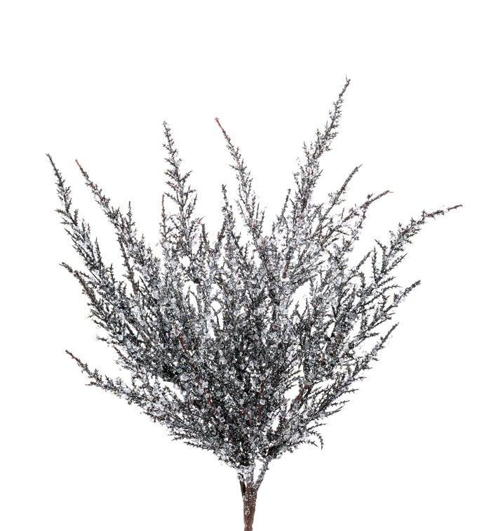 Iced Balsam Bush
