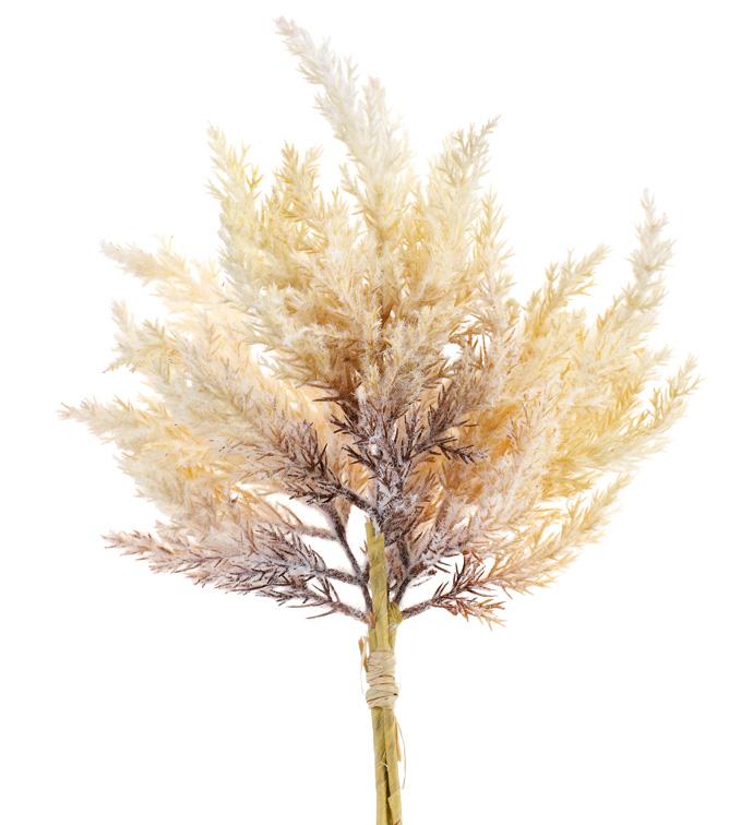 Dried Astilbe Bush