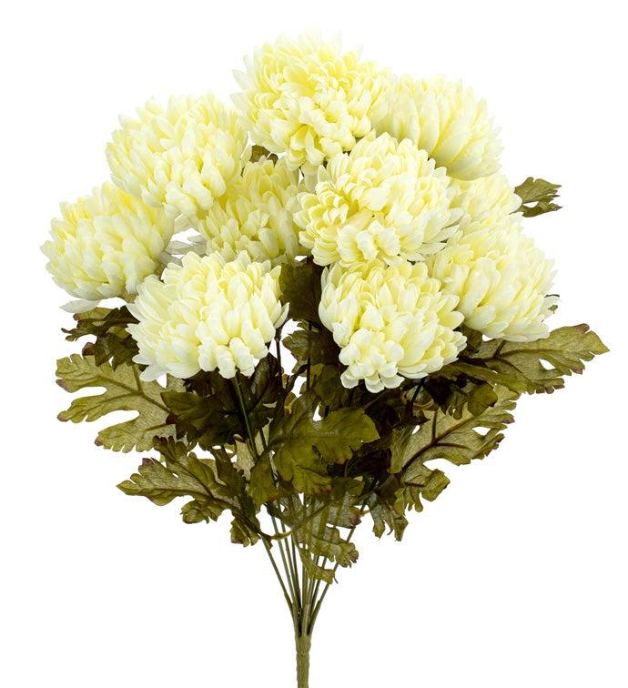 Cream Chrysanthemum Bush