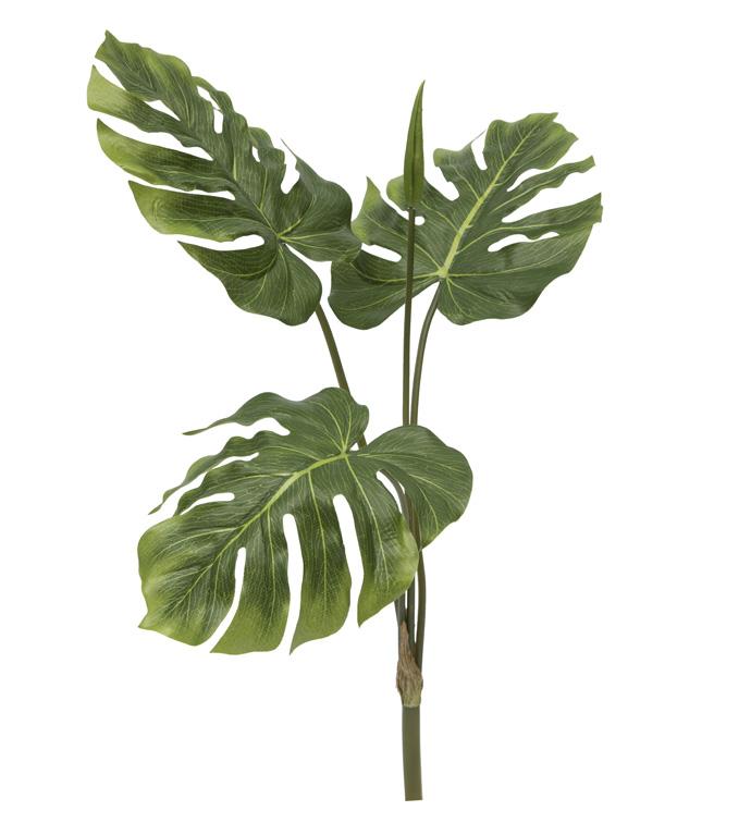 Split Leaf Philo Bush x 3
