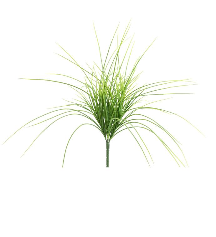 Light Green Grass Bush