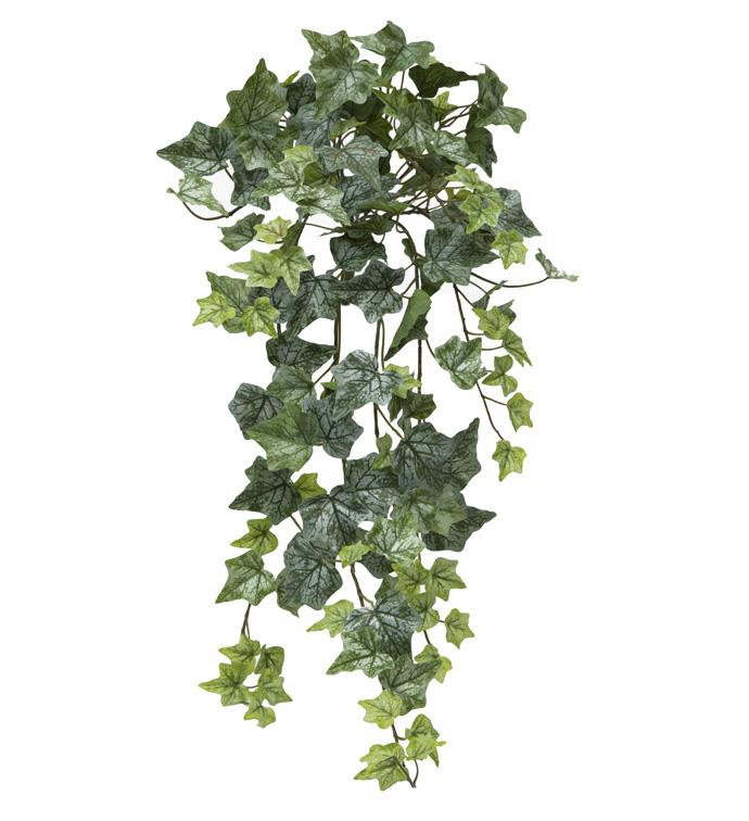 Green Ivy Bush