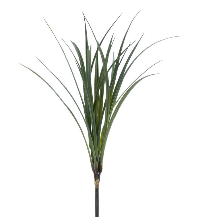 Flax Grass Bush