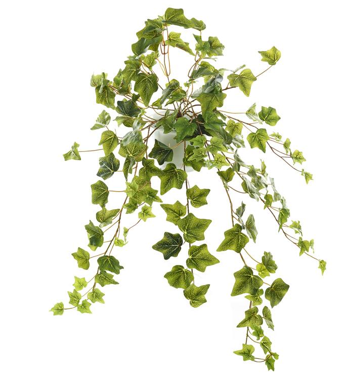 Green Ivy Bush x144